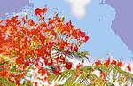 Национальный цветок Барбадоса