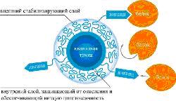 prilozhenie-43