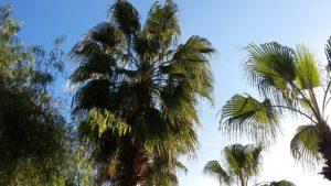 Пальмы весной в Анталье