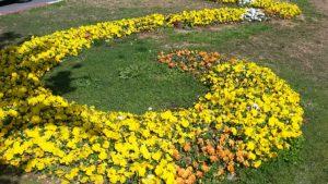 Маргаритки весной в Анталии