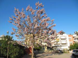 Такое ароматное дерево...
