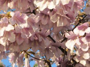 А как пахнут эти цветы!