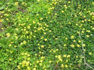 Полевые цветы в Анталье