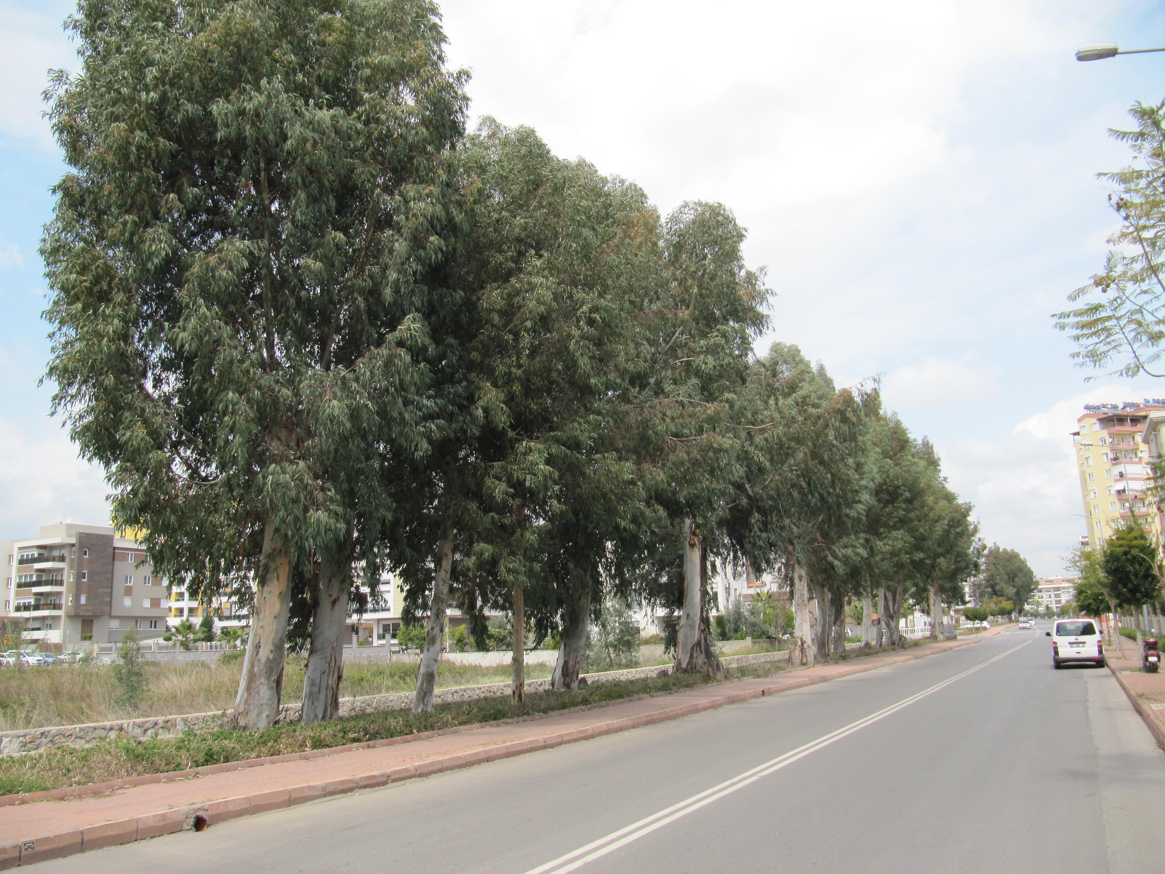 Деревья в Гюрсу