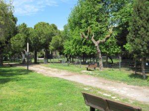 Зелень в парке Ататюрка