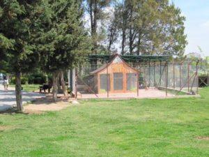 Кошкин уголок в парке Ататюрка Анталья