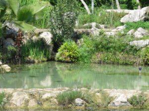 Маленький пруд в восточной части парка