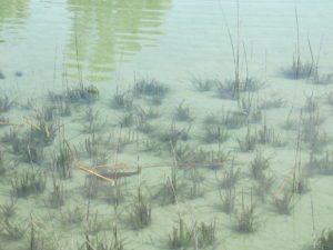 Подводные обитатели пруда