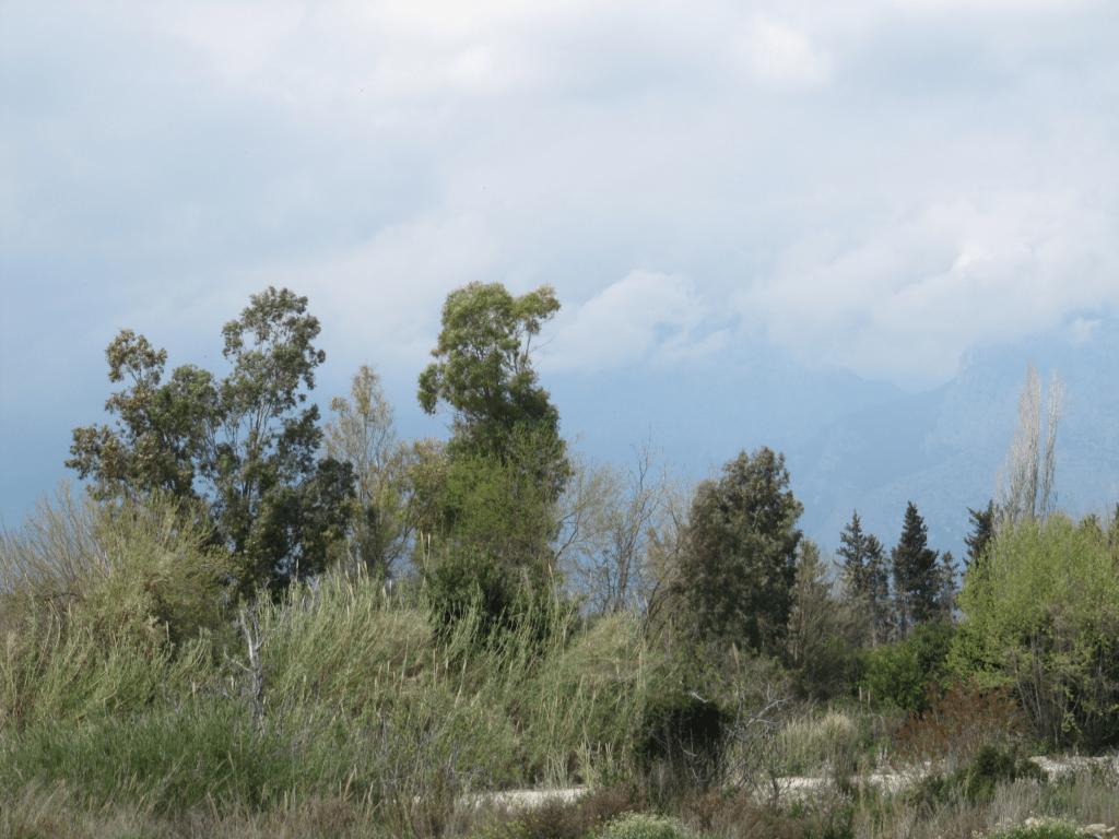 Природная зелень в Гюрсу