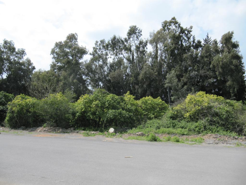 Речная зелень на границе Гюрсу